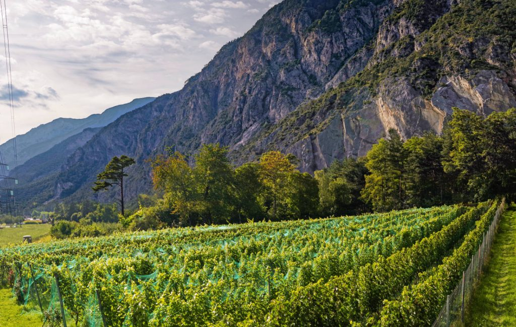 Bergland – echte Cool-Climate-Weine